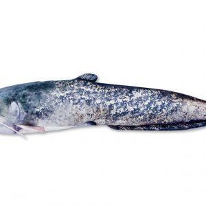 Plyšová ryba SUMEC